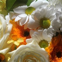 RHS Chelsea Flower Show September 2021