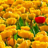 Malvern Spring Flower Show & Stratford