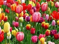 RHS Malvern Flower Show & Arley Hall
